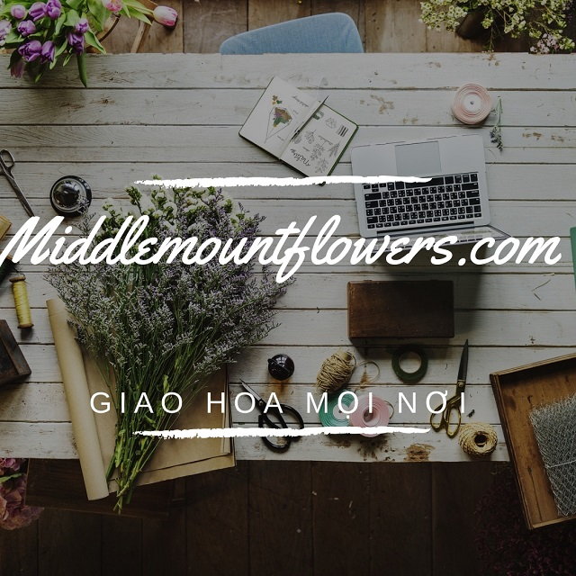 Giới thiệu shop hoa tươi Middlemountflowers.com
