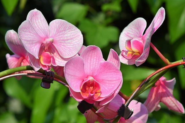 hoa lan hồ điệp đẹp nhất thế giới 8