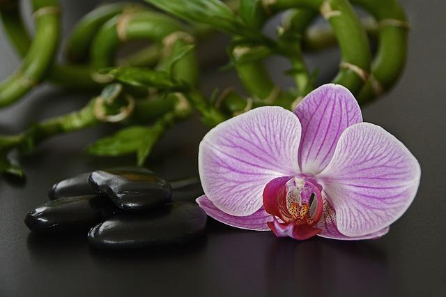 hoa lan hồ điệp đẹp nhất thế giới 13
