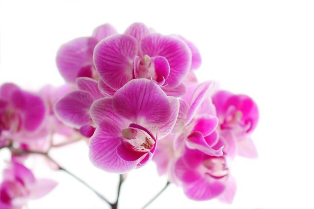 hoa lan hồ điệp đẹp nhất thế giới 16