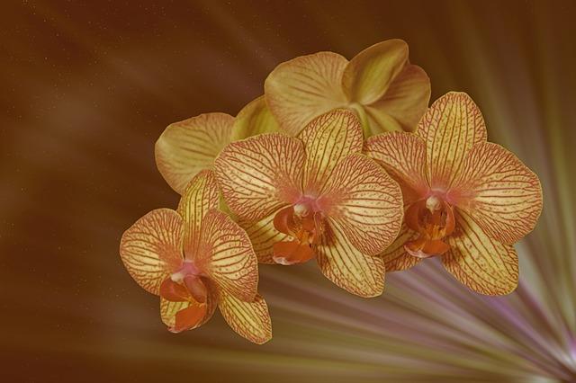 hoa lan hồ điệp đẹp nhất thế giới 21