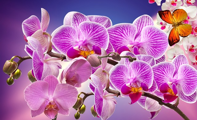hoa lan hồ điệp đẹp nhất thế giới 23