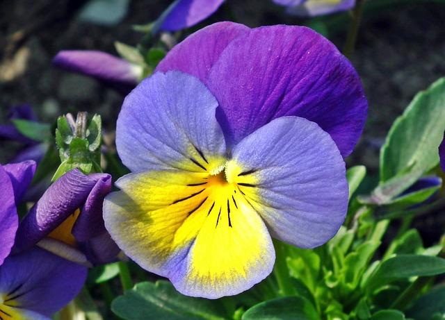 hoa pang dep 3