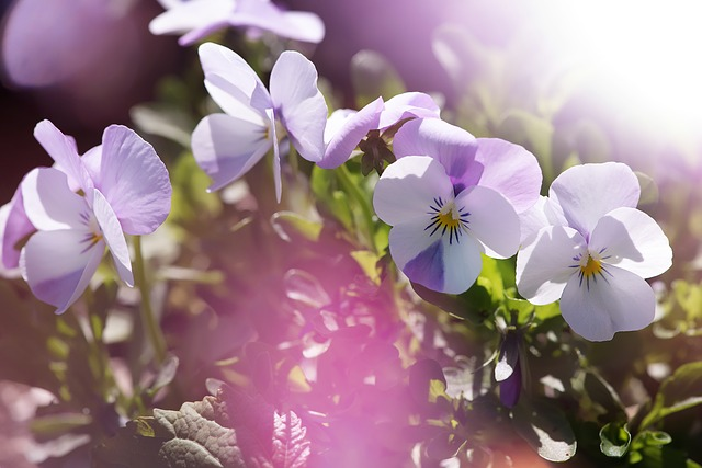 hoa pang dep 5
