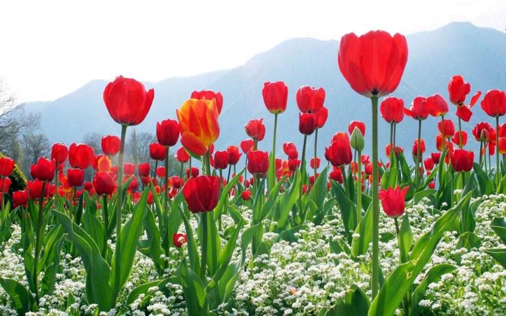 các loài hoa mang đến tài lộc